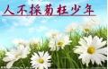百歲秉燭遊(原 我的菊花☆好小朵)
