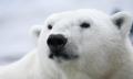 西伯利亞暴風雪