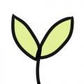 光合作用◆chlorophyll